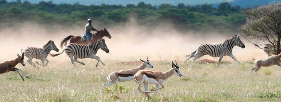 Afrique du Sud - Safari: Le Big 5