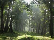 Forêt de la réserve de Parambikulam dans les Western Ghats