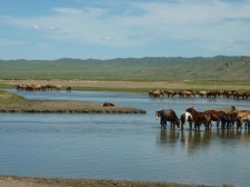Troupeau de chevaux dans la région de Lun (130 km à l'ouest d'Oulan-Bator)