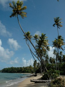Plage de Toco, côte nord-est de Trinidad
