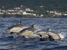 Une famille de dauphins nageant devant la côte