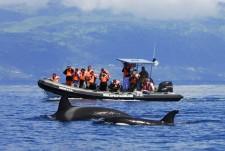 Peut-être même aurez-vous la chance d'apercevoir des orques ?