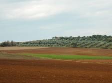 Les champs de Toscane en automne