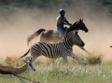 Au galop avec zèbres et antilopes