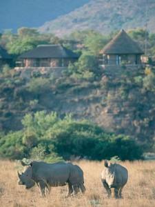 Un de vos lodges en Afrique du Sud