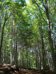 À travers la forêt de chênes et châtaigniers du parc national