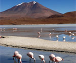 Bolivie - Lac salé - Flamands roses