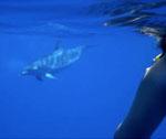 Nage en compagnie d'un dauphin
