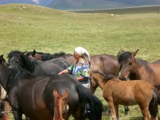 Élevage et soin des chevaux