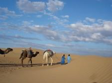 Méharée dans les dunes de la vallée du Drâa