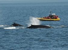 Observation au parc marin du Saguenay