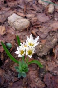 Un exemple de la flore de montagne