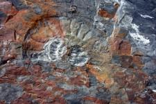 Une ammonite dans la vallée des fossiles (Argentine)
