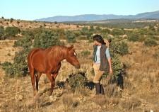Un des chevaux du gîte
