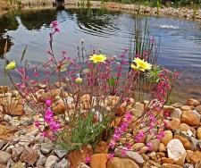 Exemple de flore de la région autour de l'étang du gîte