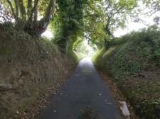 "Jersey – Une ""Green Lane"", petite route de balade"