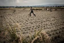 Des enfants jouent dans un champ fraîchement coupé