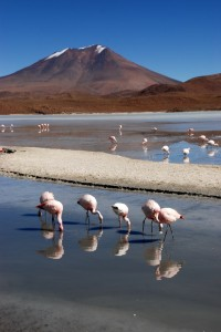 Flamants, lagune et volcans