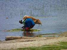 """Une """"cholita"""" sur les bords du lac Titicaca"""