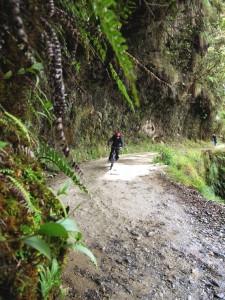 """Extension Forêt tropicale d'altitude– La """"route de la mort"""" !"""