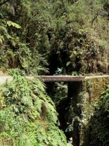 """Extension Forêt tropicale d'altitude– A fond sur la """"route de la mort"""" !"""