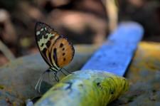 Extension Rafting– Un habitant de la jungle impassible devant une machette