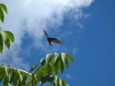 Un vautour nous survole