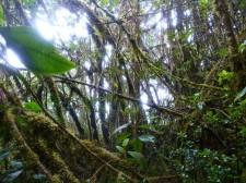 """""""Yungas"""", la forêt tropicale de montagne"""