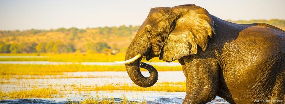 Botswana – Du delta de l'Okavango aux chutes Victoria