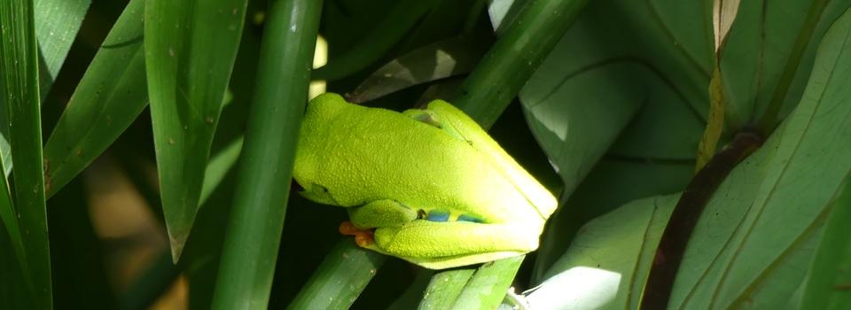 Costa Rica – Trésors naturels