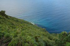 La végétation dense le long de la côte