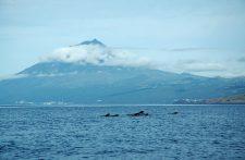 Un groupe de globicéphales nage devant le volcan