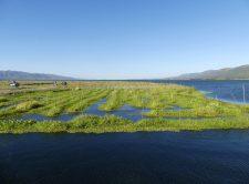 Cultures flottantes de légumes sur le lac Inle