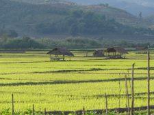 Rizières près de la ville de Kengtung
