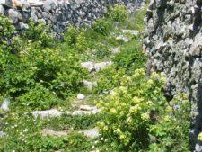 Un des nombreux sentiers de berger de Tinos