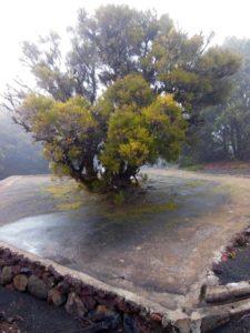 Un arbre récolte l'humidité pour alimenter une citerne