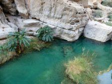 Un wadi, ou oued, point d'eau bienvenu