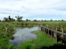 Lodge de pêche et d'observation au nord du delta de l'Okavango